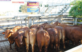 Beef Australia 2006 Achievement